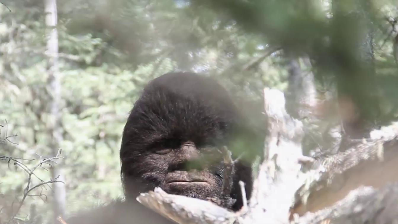 Where does bigfoot sleep