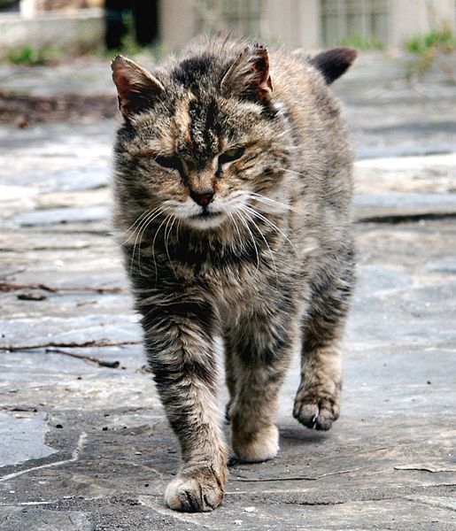 Calgary cat owners told to keep the feline inside - 660 NEWS