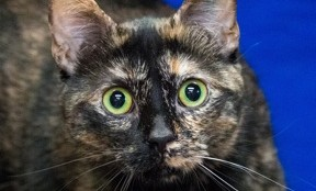 "The Meow Foundation's ""Phoenix"" has so far predicted all three games to the Flames-Ducks Stanley Cup series."