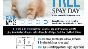 meow foundation spay day