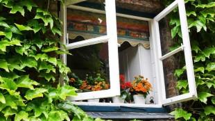 open-window (1)