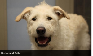 Burke is available at Red Deer SPCA