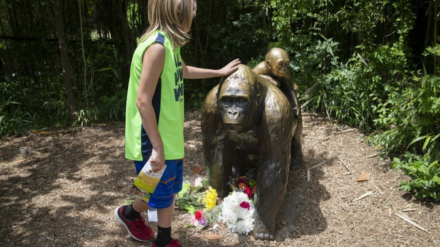 Outrage After Gorilla Killed At Cincinnati Zoo To Save Child