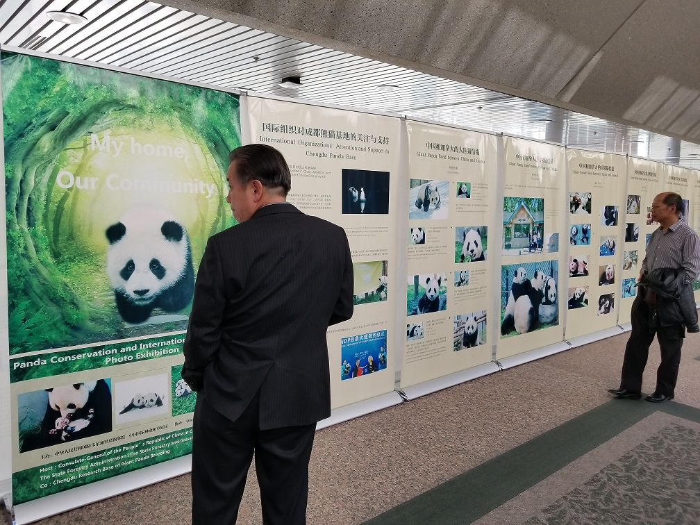 Panda photo exhibit unveiled before public appearance at Calgary Zoo