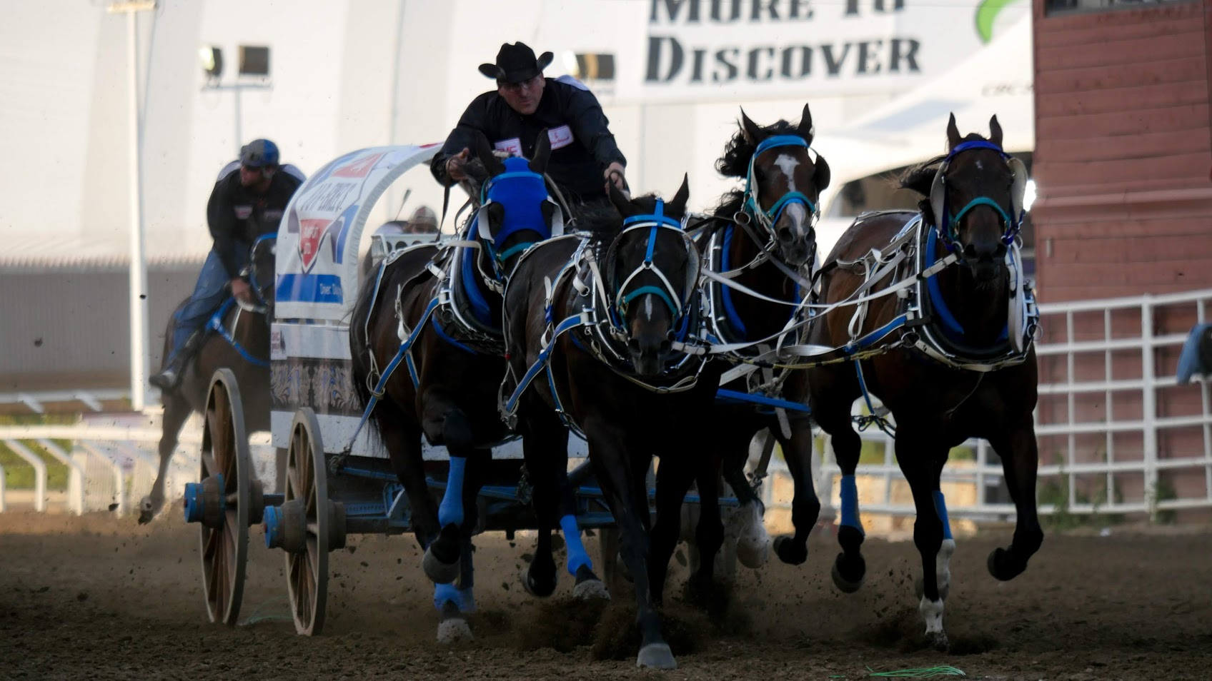 Alberta government responds to review of chuckwagon races