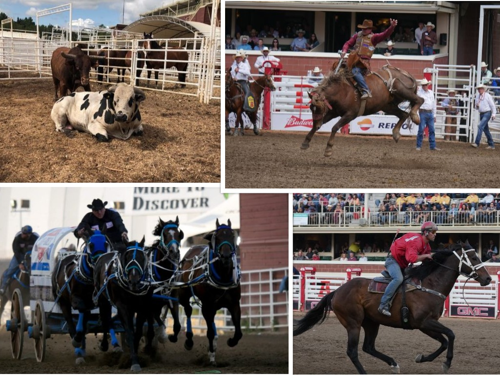 Triumph And Tragedy At Calgary Stampede 660 News
