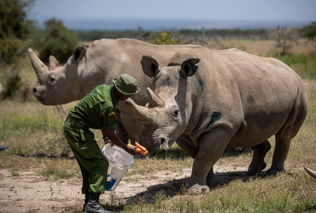 People feel COVID-19 truths hidden and rhino baby on hold;  In The News for May 26